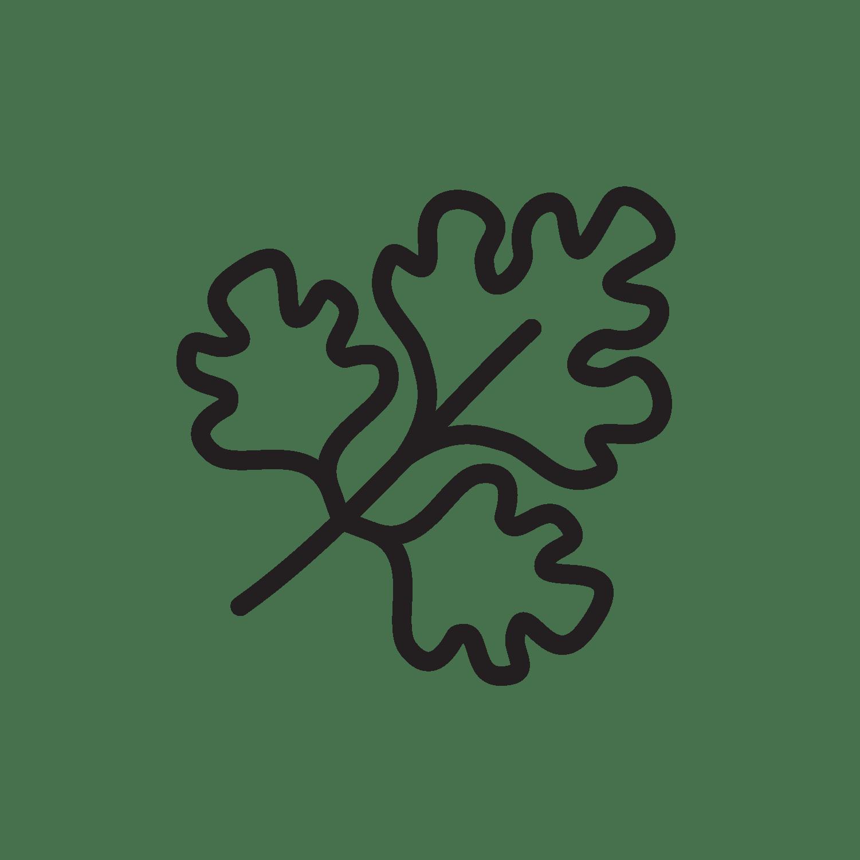 Carum petroselinum (parsley)