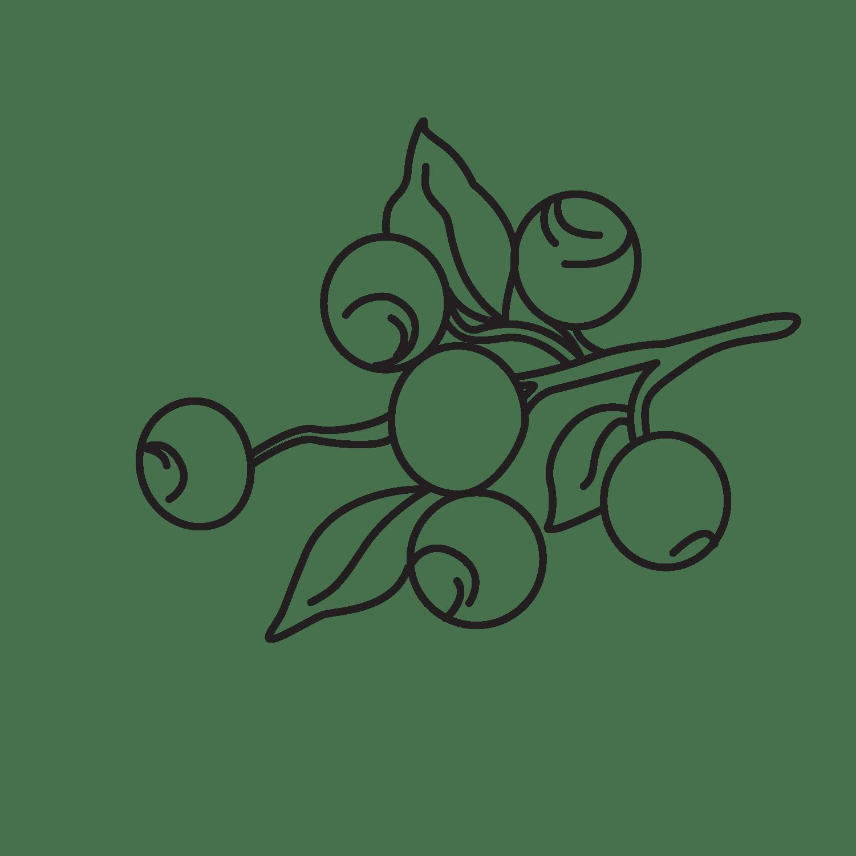 Mirtillonero (blueberry)